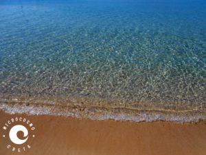 island of crete Archivi - Microcosmo Creta